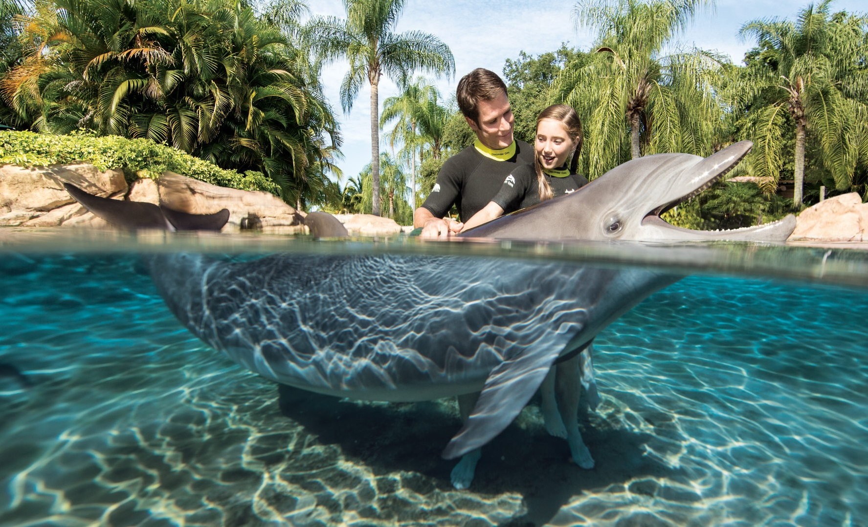 Image result for discovery cove orlando